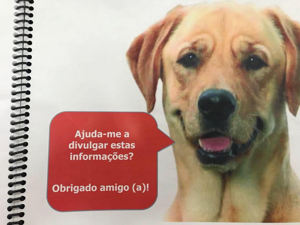 Nosso amigo, cão guia